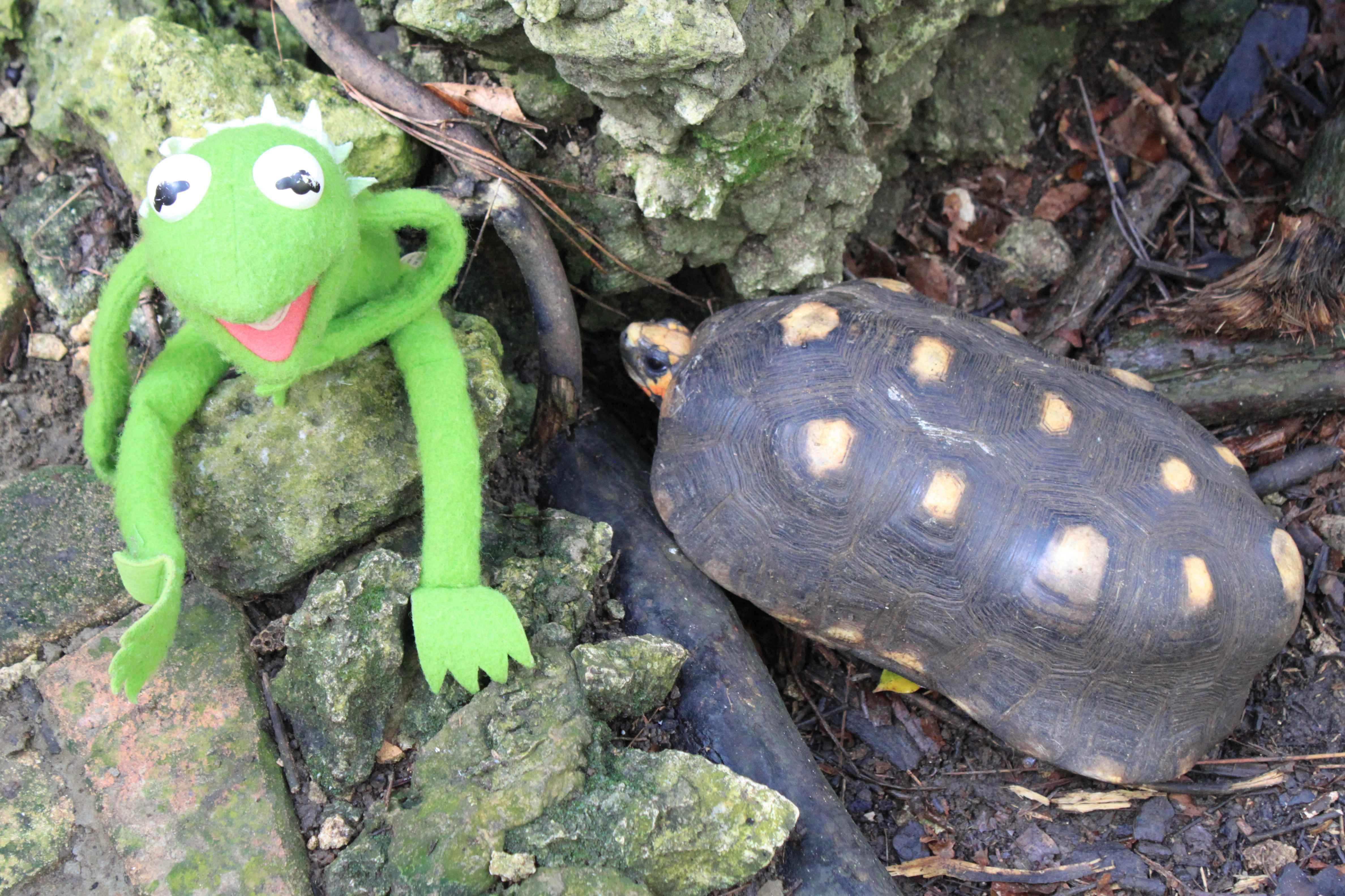 želva a žabák